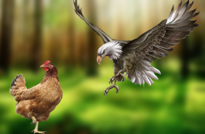 chickens-cluck-and-eagles-fly